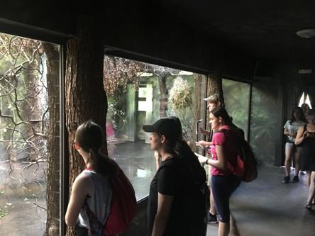 Exkurze do Safari Parku ve Dvoře Králové