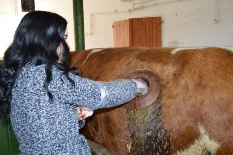 Praktický workshop v oblasti výživy, šlechtění a reprodukce masného skotu