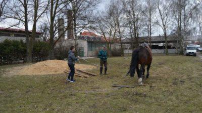Ovládání tažných koní